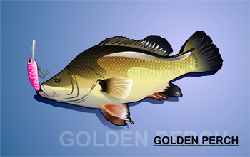 Golden Perch / Yellowbelly  Locations, Hooks, Rigs and Bait