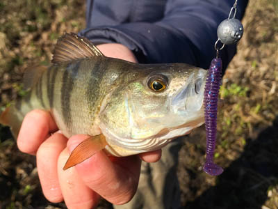 Redfin Fishing Lures Burley