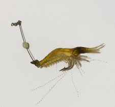 Soft Plastic Shrimp Lure Redfin Fishing
